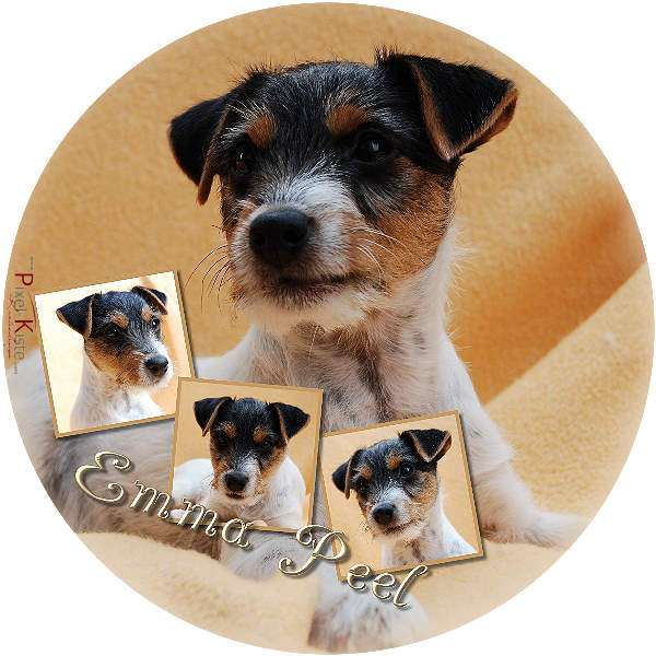 Fotoaufkleber mit Hundemotiv