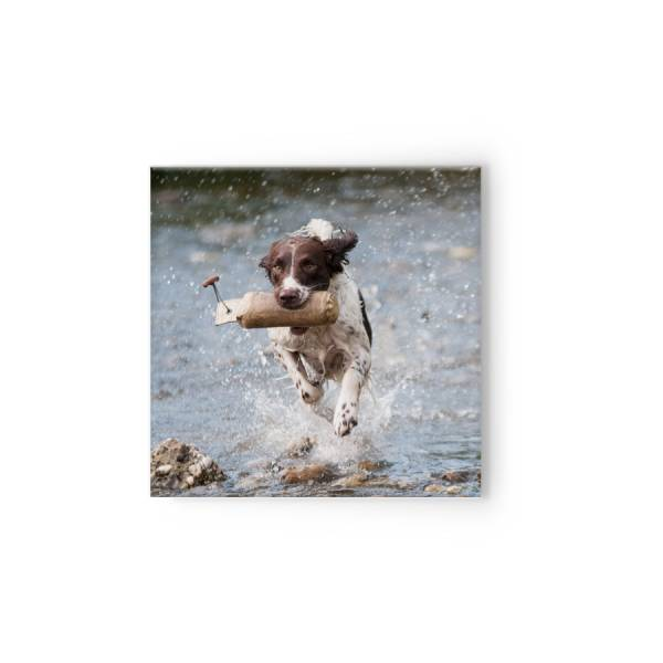 quadratische Fotoleinwand Hund Tier drucken lassen